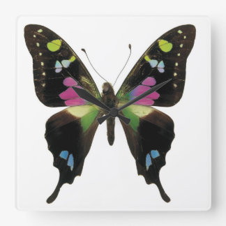 Graphium butterfly wall clock