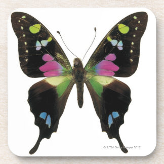 Graphium butterfly drink coasters