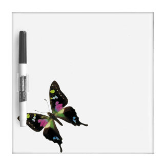 Graphium butterfly Dry-Erase board