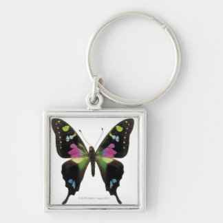 Graphium butterfly keychain