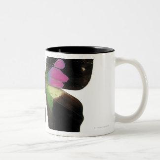 Graphium butterfly mug