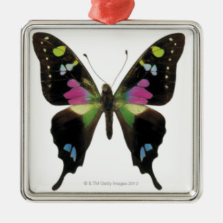 Graphium butterfly christmas tree ornaments