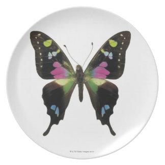 Graphium butterfly dinner plates