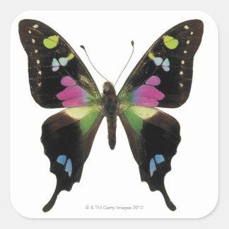 Graphium butterfly sticker