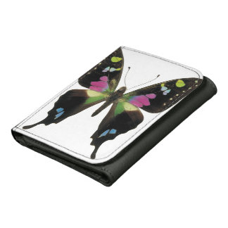 Graphium butterfly wallets