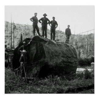 GRAPPLING with a REDWOOD LOG 1905 Poster