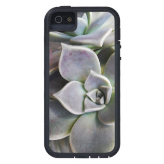 Graptopetalum paraguayense iPhone 5 cover