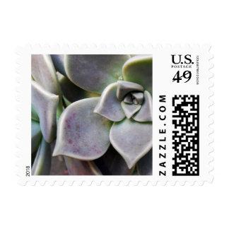 Graptopetalum paraguayense postage stamp