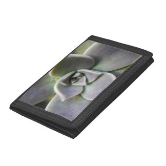 Graptopetalum paraguayense tri-fold wallets