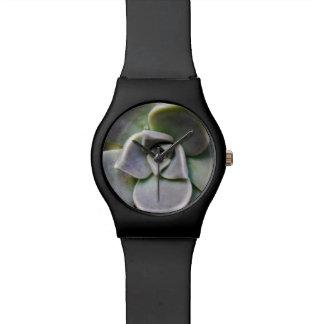 Graptopetalum paraguayense wristwatches
