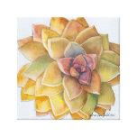 Graptopetalum Watercolor by Debra Lee Baldwin Gallery Wrapped Canvas