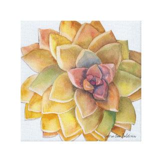 Graptopetalum Watercolor by Debra Lee Baldwin Canvas Print