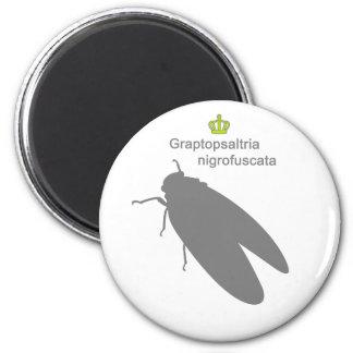 Graptopsaltria nigrofuscata g5 2 inch round magnet