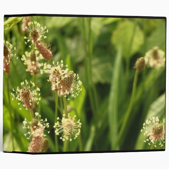 gras panicles 3 ring binder