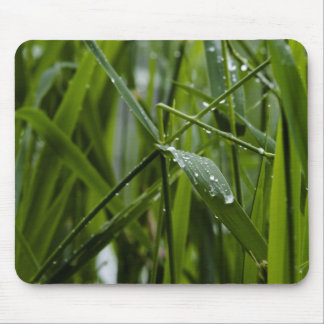 grass-after-rain-2012-05-27 mouse pad