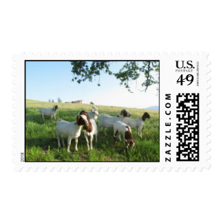 Grass and Goats Postage Stamp