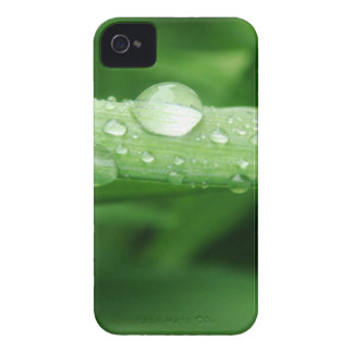 Grass and Rain Drops iPhone 4 Cover