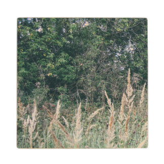 Grass And Trees Nature Pattern Photo Template Wood Coaster