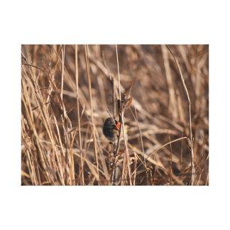 GRASS BIRD RURAL QUEENSLAND AUSTRALIA CANVAS PRINT
