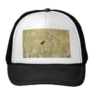 GRASS BIRD RURAL QUEENSLAND AUSTRALIA TRUCKER HAT