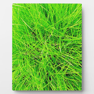 Grass Blades Nature Abstract Shapes Fashion style Plaque