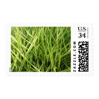 Grass Blades Nature Abstract Shapes Fashion style Stamp