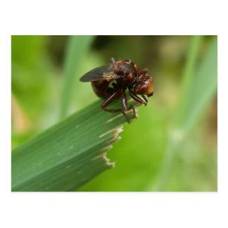 Grass Bug Postcard