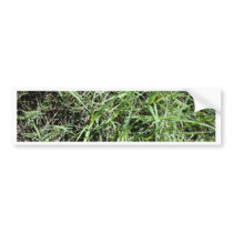 Grass Bumper Sticker