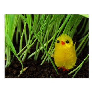 grass chick postcard