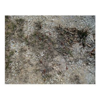 Grass Dry And Stony Ground Close Up Postcard