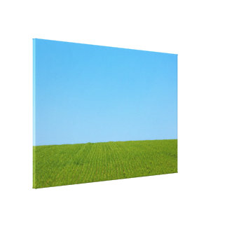 Grass Field and Blue Sky Canvas Print