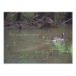 Grass, Goose, and Raindrops Postcard
