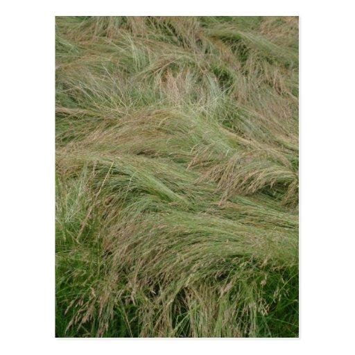 grass hair postcard