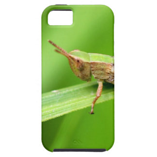 Grass Hopper on Leaf iPhone 5 Cover