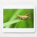 Grass Hopper on Leaf Mousepads