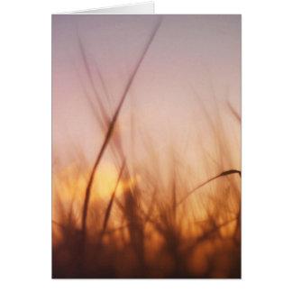 Grass in a windy field card