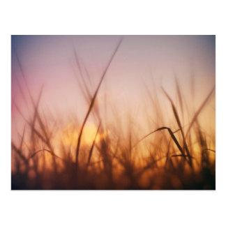 Grass in a windy field postcard