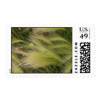 Grass in the wind stamp