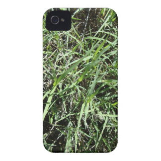 Grass iPhone 4 Case