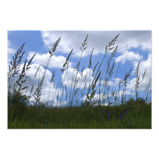 Grass Meets Sky Photo Print