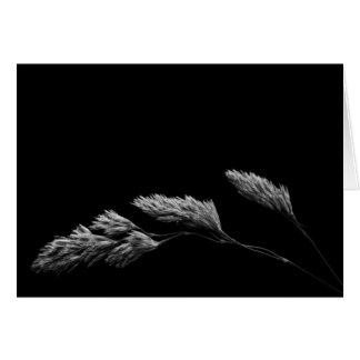 Grass monochrome photography card