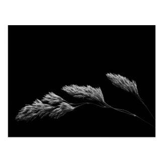 Grass monochrome photography postcard