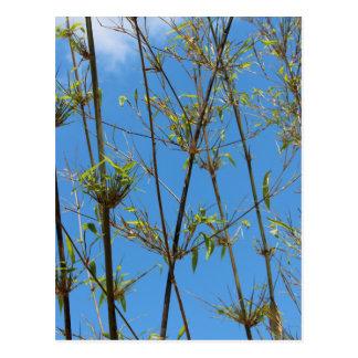 Grass photo on blue background postcard