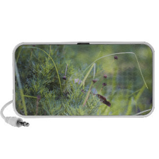 Grass Photography Mp3 Speaker