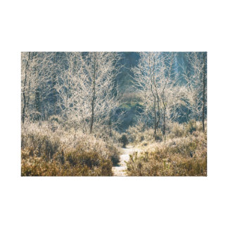 Grass plants and frosted trees canvas print