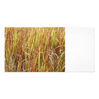 Grass sawgrass background florida plant personalized photo card