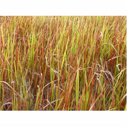 Grass sawgrass background florida plant photo cut out