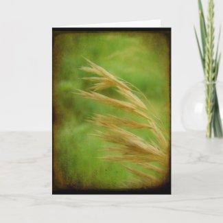Grass Seed card
