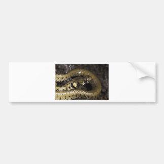 Grass snake bumper sticker
