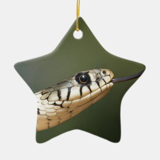 Grass Snake Ceramic Ornament